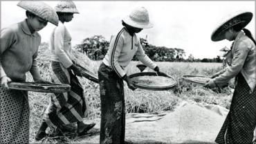 Rice harvesting in Darmasaba, Bali (30242617; Credit: The World Bank).