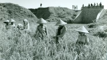 Laborers harvesting rice near the Tarum Timor Primary Canal